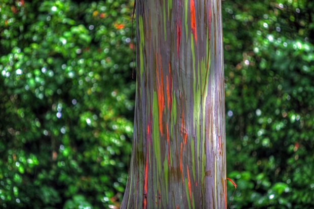 rainbow eucalyptus 52 Cores da Natureza: Rainbow Eucalyptus + Morning Glory Pool