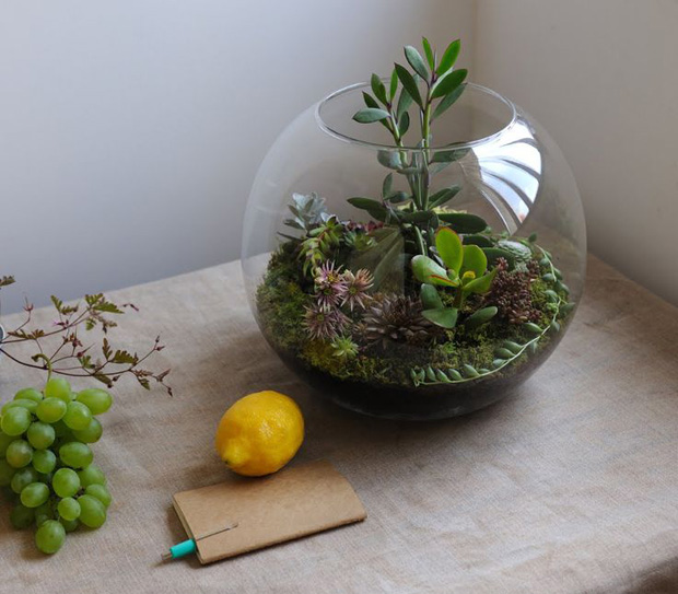 Para cuidar e enfeitar a sua casa terr rios aprenda o for Peceras de jardin
