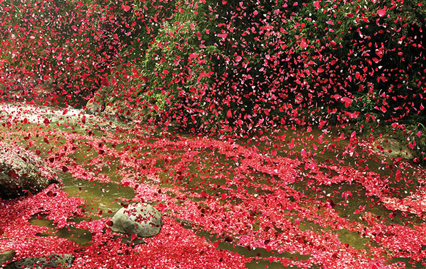 follow the colours nick meek photograph flower petals 03 Nick Meek fotografa Costa Rica coberta de pétalas de flores