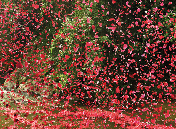 follow the colours nick meek photograph flower petals 05 Nick Meek fotografa Costa Rica coberta de pétalas de flores