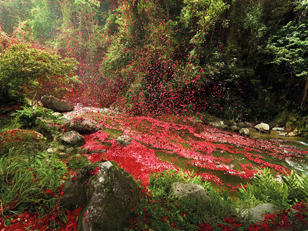 follow the colours nick meek photograph flower petals 06 Nick Meek fotografa Costa Rica coberta de pétalas de flores