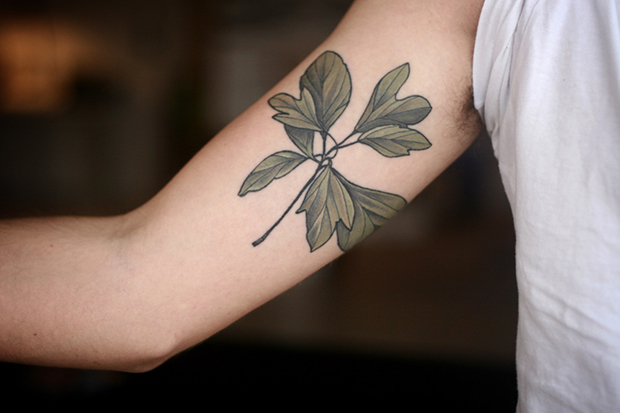 follow-the-colours-tatuagens-botanicas-alice-carrier-16