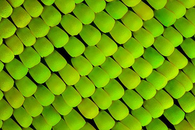 follow the colours linden gledhill borboletas 02 Asas de borboleta vistas sobre microscópio