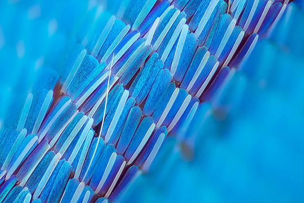 follow-the-colours-linden-gledhill-borboletas-08