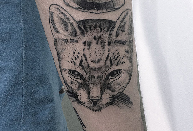 capa-gato-jonathan-tattoo