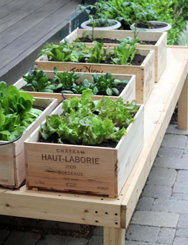 Manejo em horta escolar transdisciplinaridade e sustentabilidade 7