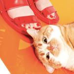 The Cat and the Flat: editorial da Vogue traz gatos e sapatos para todos os gostos