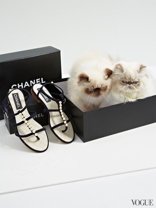 gatinhos-e-sapatos-vogue-20