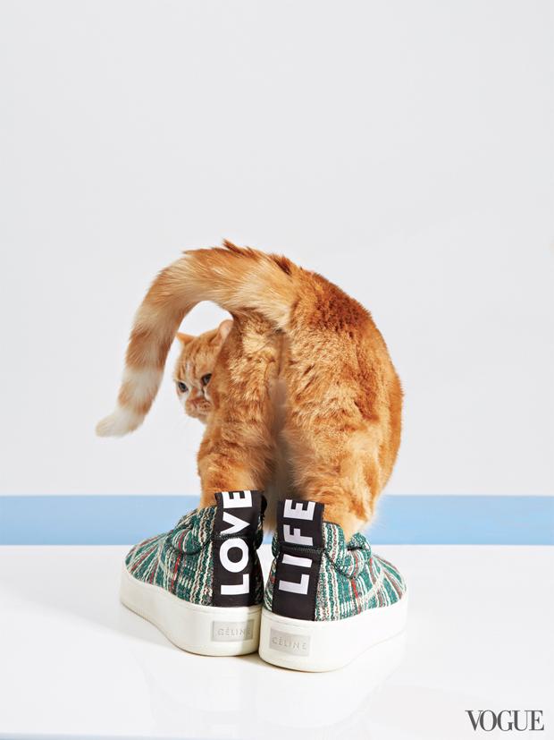 gatinhos-e-sapatos-vogue-23