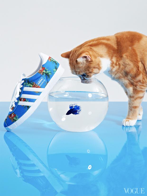 gatinhos-e-sapatos-vogue-27
