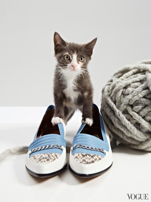 gatinhos-e-sapatos-vogue-29