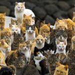 Ilha dos Gatos é atração turística no Japão