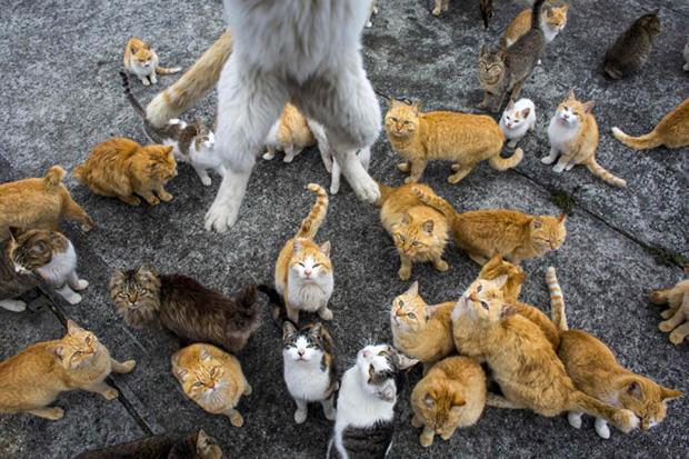 Aoshima Ilha dos Gatos Japão 03