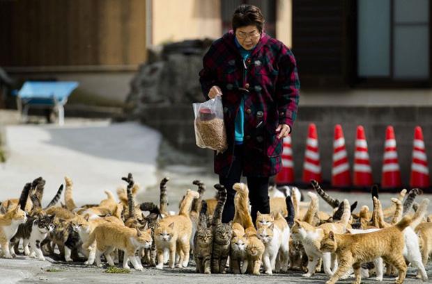 Aoshima Ilha dos Gatos Japão 16