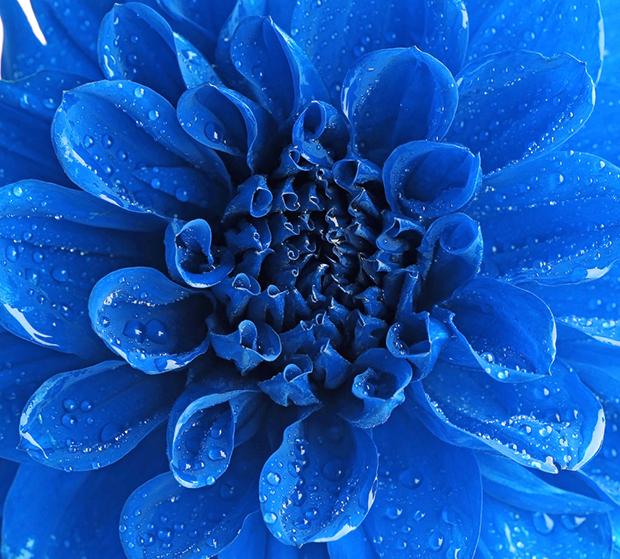Resultado de imagem para imagens de azuis