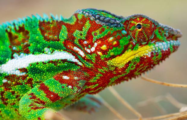 Camaleão muda cor nanocristais