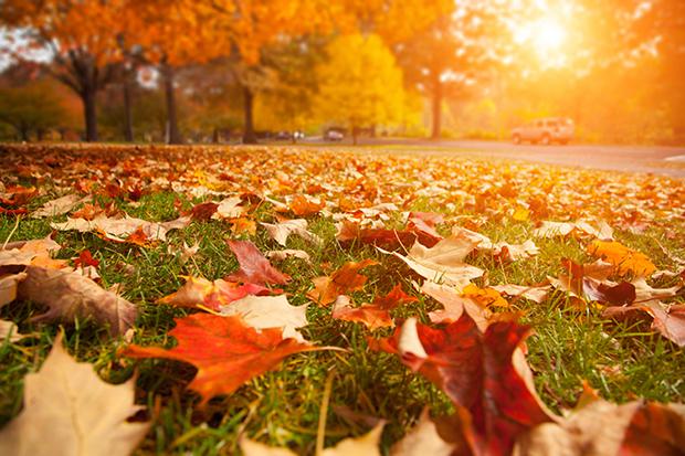 Shutterstock significado laranja folhas secas