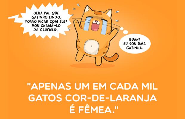Gotas de Cor gatos laranjas