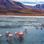 Viaje pela América Latina com 80 videoclipes incríveis em HD e 4K
