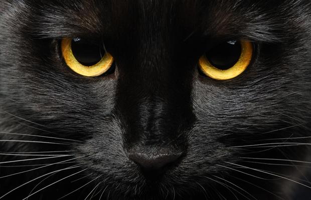 curiosidades cor preta preto gato