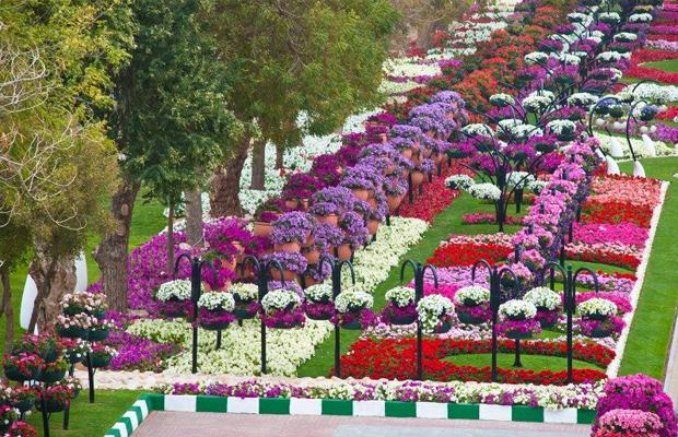 viagem Dubai parque das flores Al Ain Paradise