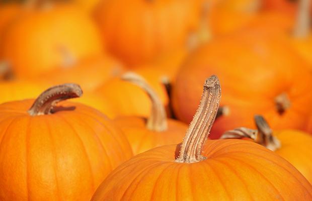 Halloween curiosidades