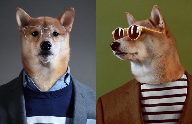 O Dog Hairstyle: Conheça O Menswear Dog, Um Cachorro Que Ganha 15 Mil