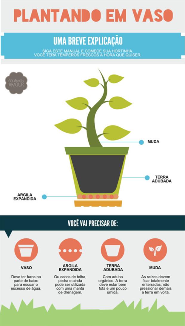 plantando em vaso infográfico mini horta em casa