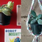 Suculentas: 2 projetos criativos que reutilizam cápsulas de café para decorar a sua casa!