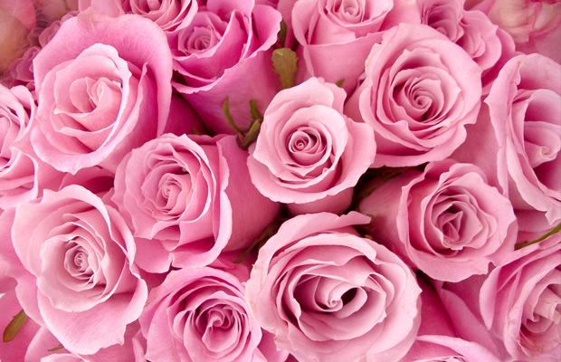 curiosidades cor rosa flores
