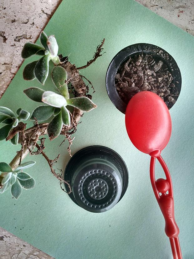plantar suculentas faça você mesmo DIY