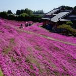 Marido planta flores durante anos para combater depressão da esposa. Conheça o jardim da esperança do Sr. e da Sra. Kuroki