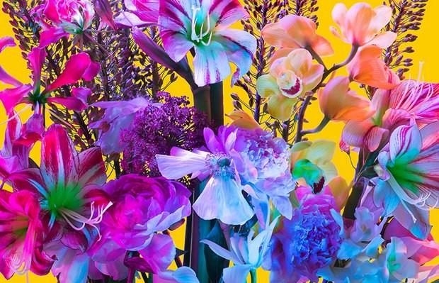 fotografia Torkil Gudnasson Eletric Blossom
