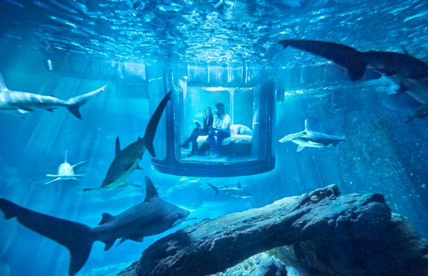 Airbnb quarto submerso aquarium de Paris tubarões