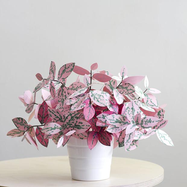 Corrie_Beth_Hogg_paper_plant_polkadot-571e47f196834__880