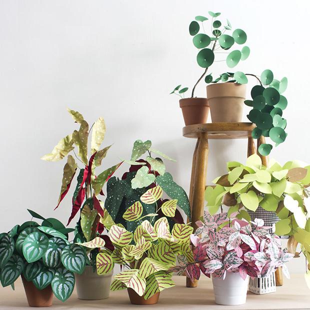 Corrie_Hogg_paper_plants_multi-571e477d6aa14__880