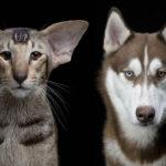 cães e gatos Série Animal Soul fotógrafo Robert Bahou
