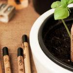 Sprout Pencil: após ser plantado, lápis se transforma em ervas, flores ou sua planta favorita!