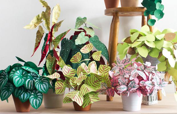 plantas de papel Corrie Hogg
