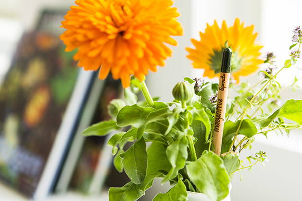 follow-the-colours-sprout-pencil-lapis-com-sementes-ecodesign-01