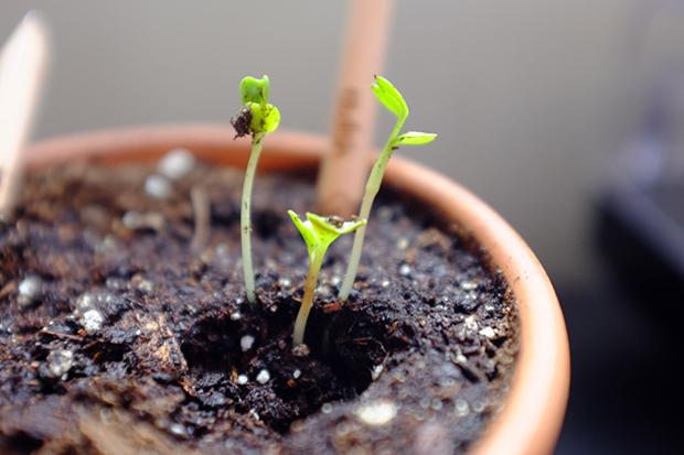 follow-the-colours-sprout-pencil-lapis-com-sementes-ecodesign-02