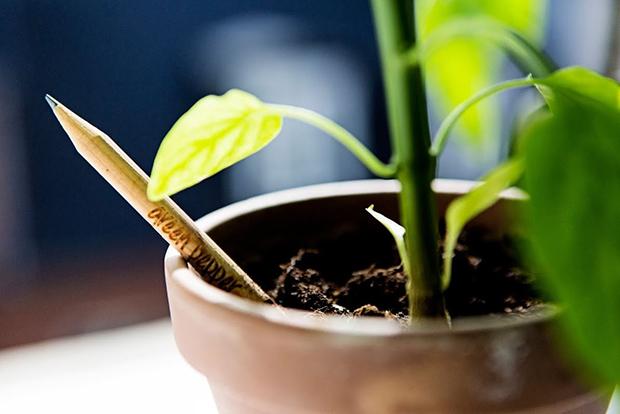 follow-the-colours-sprout-pencil-lapis-com-sementes-ecodesign-03