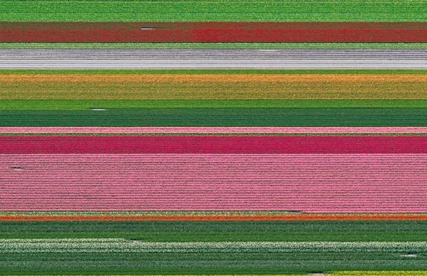campos-tulipas