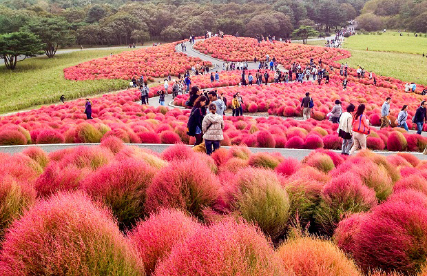 Hitachi Seaside Park Japão