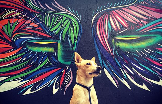 cido e a cidade vira-lata arte urbana