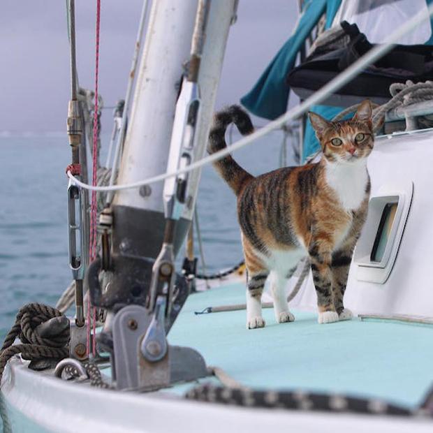 follow-the-colours-gato-barco-viagem-Liz Clark-09