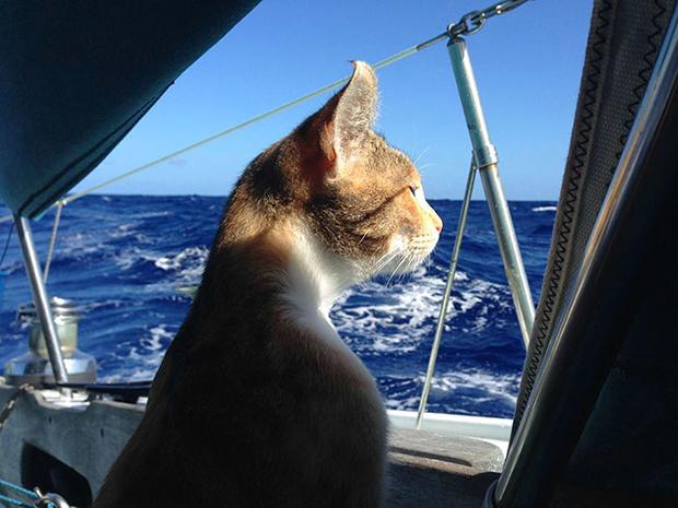 follow-the-colours-gato-barco-viagem-Liz Clark-10
