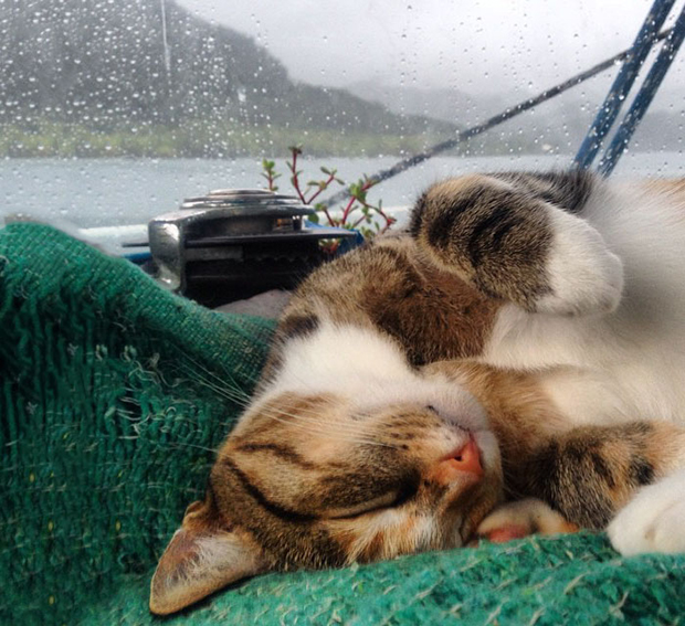 follow-the-colours-gato-barco-viagem-Liz Clark-13