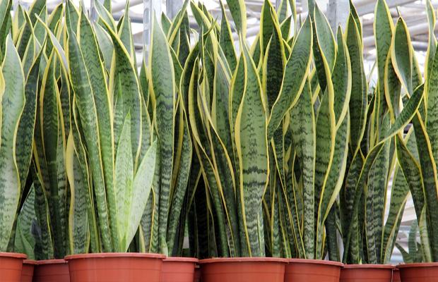 follow-the-colours-plantas-purificam-ar-nasa-03