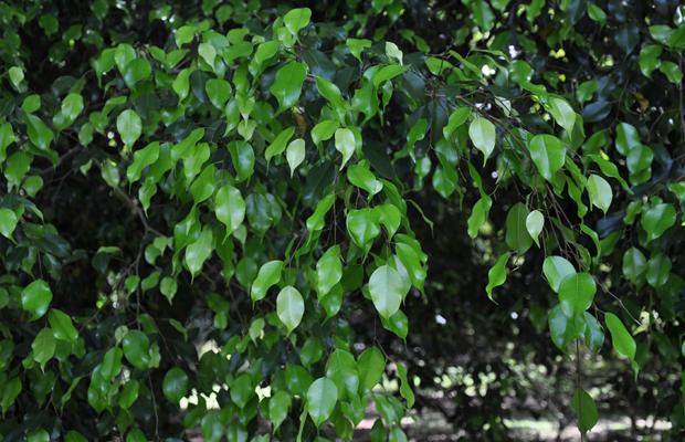 follow-the-colours-plantas-purificam-ar-nasa-08